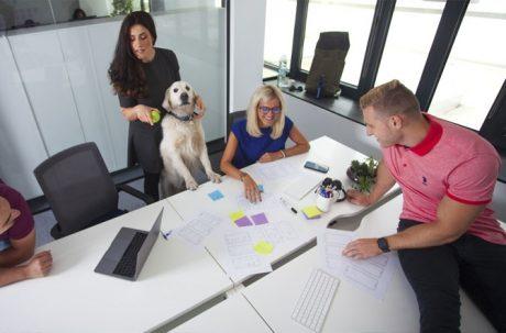 Решения базирани на данни и човешко отношение: Как Resolute Software прилага на практика науката за изграждане на щастлив екип